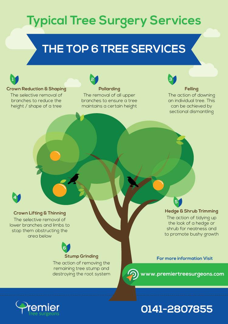 Glasgow Tree Services Infographic