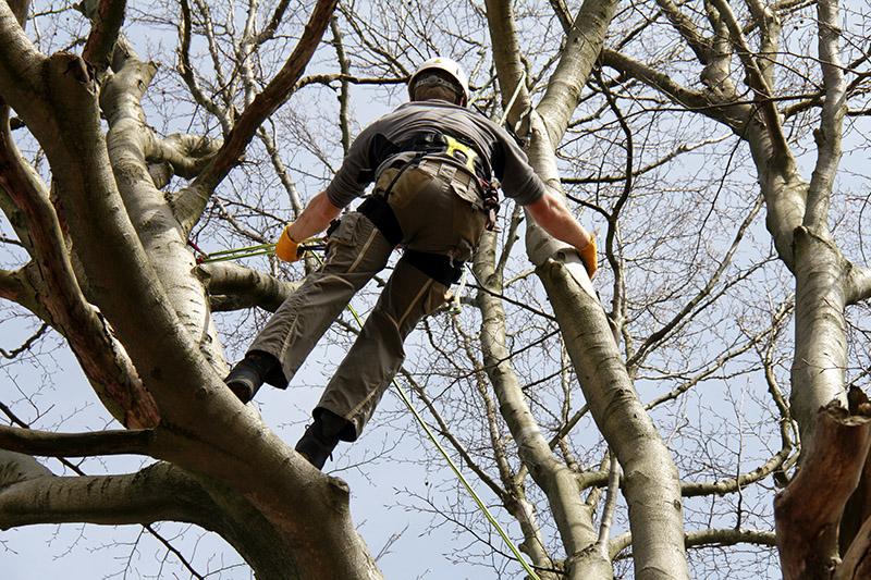 Tree surgeon prices Glasgow