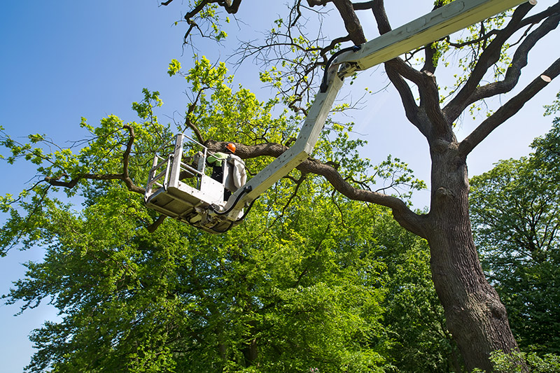 What is the cost of tree removal Glasgow