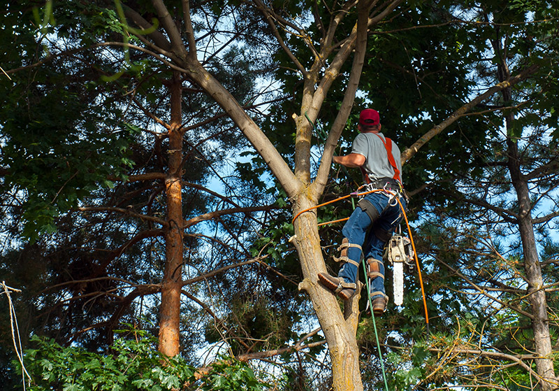 How much does it cost to remove a tree Glasgow